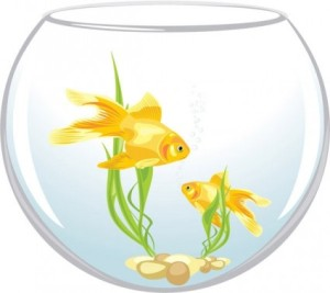 goldfish_vector_2_163542